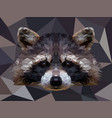 polygonal raccoon isolated on white low poly vector image vector image