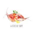 Watercolor shrimps