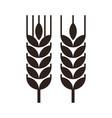 wheat grain icon vector image