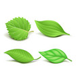 collection of realistic green leaves set vector image vector image