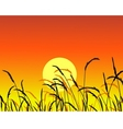 grass silhouette vector image