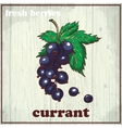 Hand drawing of currant Fresh vector image vector image