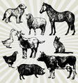 home animals vector image vector image