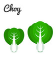 set of vegetable bok choy vector image vector image