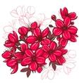 Plum blossom vector image