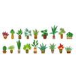 pot plants interior decorations vector image