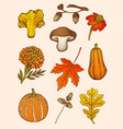 set of mushrooms flowers and leaves vector image vector image