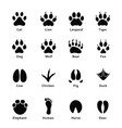 animals footprints paw prints set of different vector image vector image