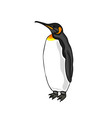 bird emperor penguin vector image