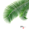 Coconut leaves isolated on white background vector image vector image