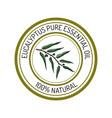 eucalyptus essential oil label aromatic plant vector image vector image