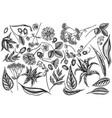 set hand drawn black and white aloe vector image vector image