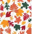 colourful leaves vector image vector image