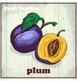 Hand drawing of plum Fresh berries vector image vector image