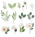 white camellia flower and green leaves branch vector image