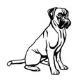 boxer dog - isolated on white vector image vector image
