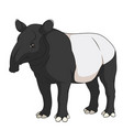 color of a malayan black tapir vector image vector image
