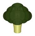 isolated broccoli icon vector image