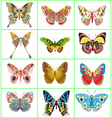 set of decorative butterflies vector image vector image