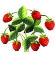 strawberry plant with red strawberries vector image vector image