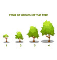 cartoon tree growth stages vector image