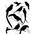 silhouettes tropical birds vector image