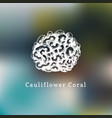 cauliflower coral drawing of vector image vector image