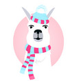 cute llama in a scarf and hat with a fluffy pompon vector image