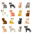 funny cats in flat style isolate on white vector image