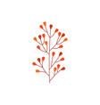 orange autumn branch of leaves isolated on white vector image vector image