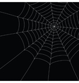 white spider web vector image