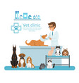 animals in cabinet of vet hospital vector image
