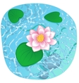 blooming lotus on shining water vector image