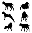 cute goats silhouette set vector image vector image