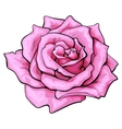 Deep pink rose top view isolated sketch vector image vector image