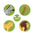 african safari design vector image