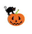 black cat in a halloween pumpkin background is vector image vector image
