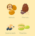 piles of different nuts pistachio walnut tasty vector image vector image