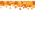 autumn template with golden maple and oak leaves vector image vector image