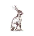 cute bunny rabbit or hare isolated hand drawn vector image