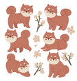 set shiba inu and flowers isolated on white vector image