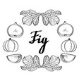 calligraphy monochrome fig poster logo vector image vector image