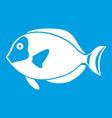 surgeon fish icon white vector image