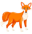 a red fox on white background vector image vector image