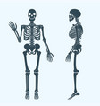 human bones skeleton silhouette anatomy of vector image