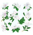 multi colored flowers rhododendrons and leaves vector image