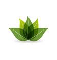 green leaf lotus icon vector image