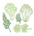 hand drawn sketch of green food vector image vector image