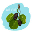 mulberry with green leaves isolated on blue vector image vector image