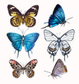 collection realistic butterflies for design vector image